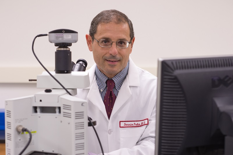 Domenico Praticò, MD, Professor in the Center for Translational Medicine