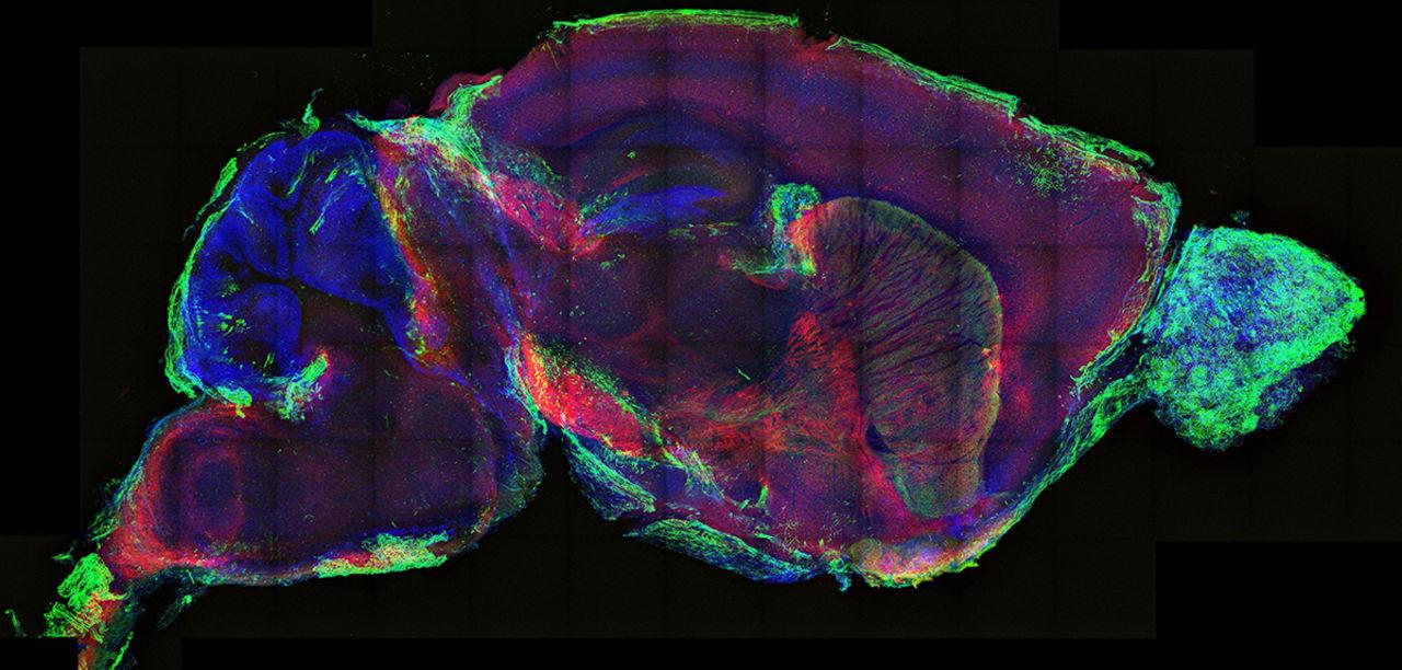neural sciences2